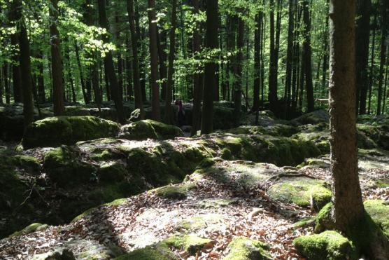 Reisen zu schamanischen Kraftorten